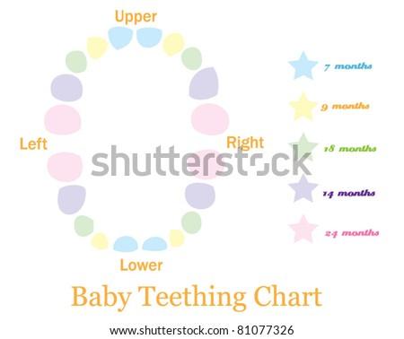 baby teething chart - stock vector