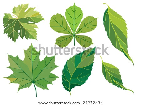 Background from leaves. Vector.