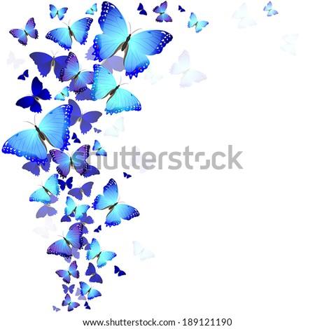background of beautiful blue butterflies - stock vector