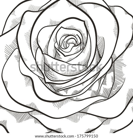 Background with beautiful black and white rose. Hand-drawn contour lines and strokes. - stock vector