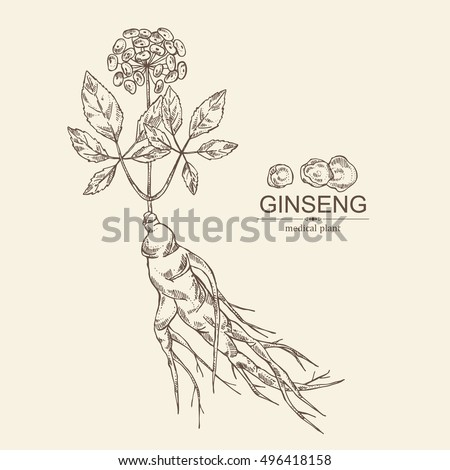 Background with ginseng. Medical plant. hand drawn