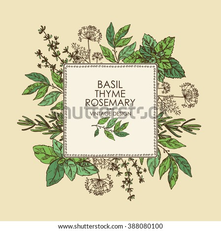 Background with Herbs. Bay leaf, basil, thyme, rosemary, mint, hand drawn