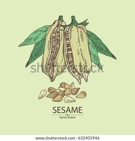 how to grow sesame seed plant