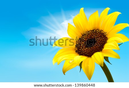 Background with sunflower field over cloudy blue sky. Vector - stock vector