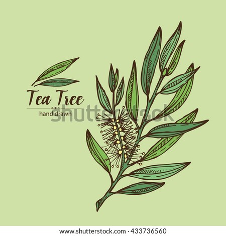 Background With Tea Tree Cosmetics And Medical Plant Hand Drawn