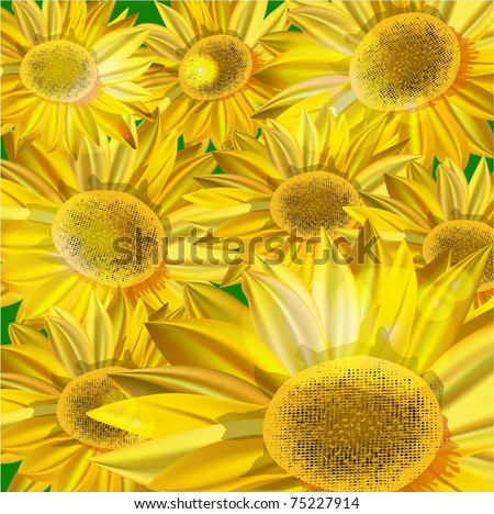 background with yellow sunflowers. vector illustration