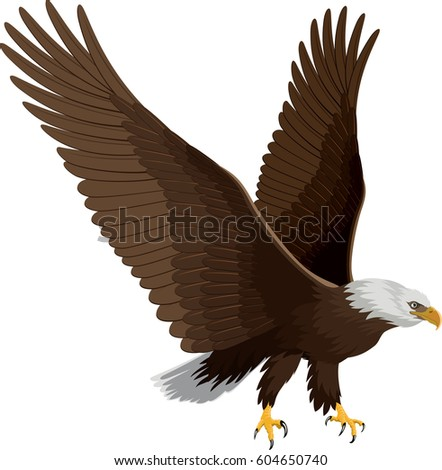bald eagle isolated on white vector stock vector 604650740 rh shutterstock com bald eagle vector free bald eagle vector art free