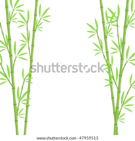 Bamboo background - stock vector