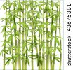 bamboo background EPS 10 - stock photo