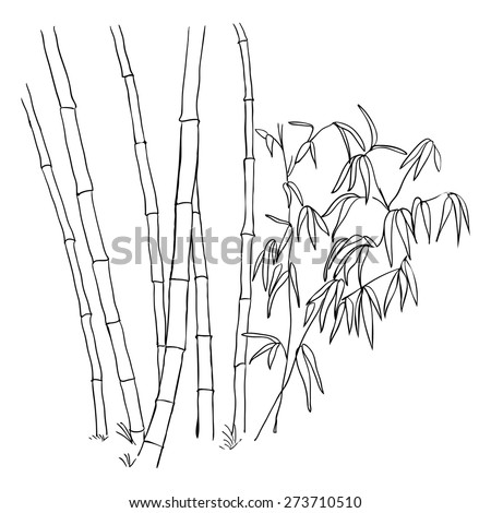 Bamboo branches isolated on the white background. Sketch.