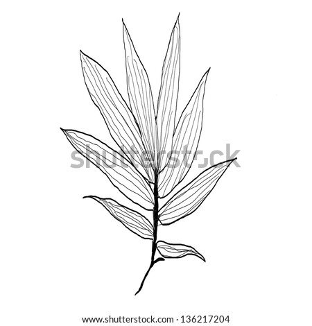 Bamboo Leaves Drawing Stock