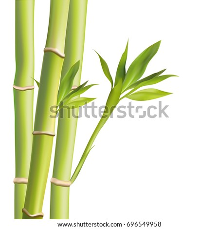 Bamboo leaves vestor illustration. Vector illustration with isolated objects