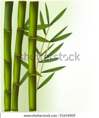 Bamboo on the green and white background. Vector. - stock vector