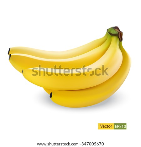 Banana fruit close up. Bunch of bananas isolated on white background. Qualitative vector illustration of banana