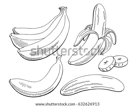 Banana Fruit Graphic Black White Isolated Sketch Illustration Vector