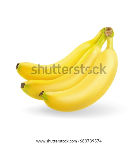 Banana fruit realistic. Bunch of bananas isolated