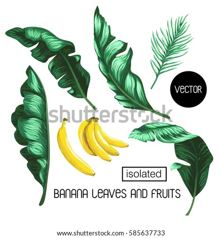banana leaves and fruit isolated