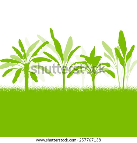 Banana tree, organic ecology background  - stock vector