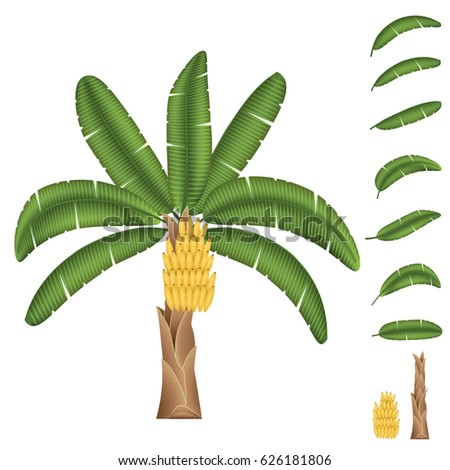 Banana Tree With Fruits Set Of Leaves Trunk And Isolated On White
