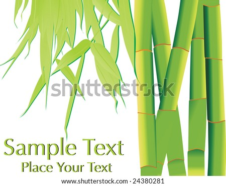 banner bamboo with its leaf isolated on white, wallpaper - stock vector