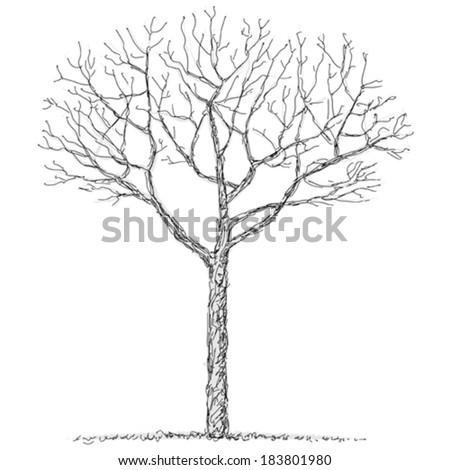 Bare tree - stock vector