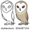Barn owl or Tyto Alba - vector hand drawing  in modern cartoon style - stock photo