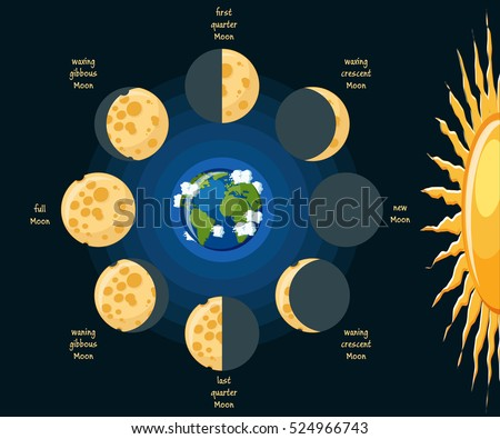 Basic Moon Phases Diagram Cheese Moon Stock Photo Photo Vector