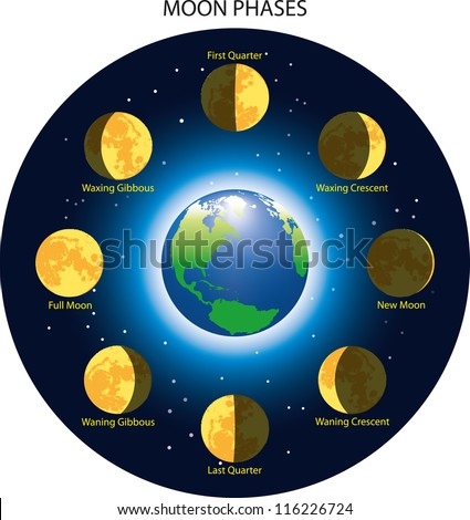 Basic phases of the moon. - stock vector