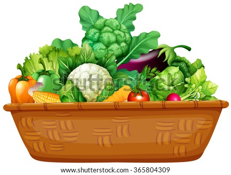 Basket Full Of Fresh Vegetables Illustration