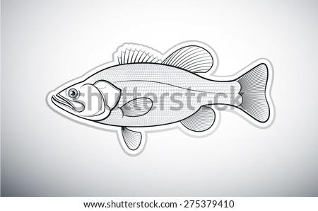 Bass fish outline vector illustration - stock vector