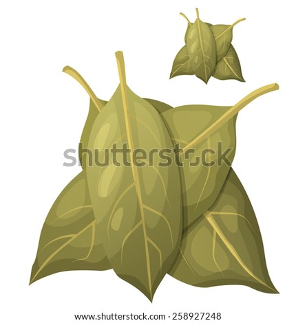 Bay leaves isolated on white background. Detailed Vector Icon. Series of food and drink and ingredients for cooking. - stock vector