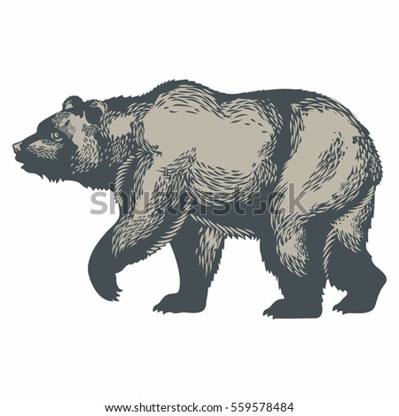 Bear, illustration, vector