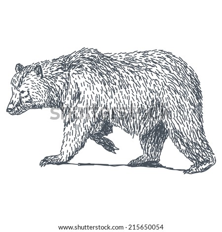 Bear sketch drawing isolated on white background - stock vector