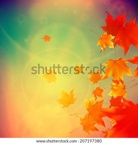 Beautiful autumn Leaves with delicate sunset light. EPS10 - stock vector