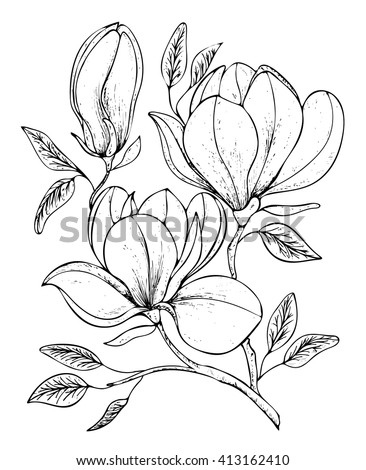 Beautiful background with twig blooming Magnolia. Vector illustration. EPS 10