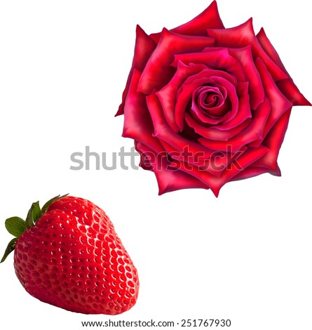 Beautiful bright pink red Rose Flower, red ripe strawberry isolated on white background. Vector illustration - stock vector