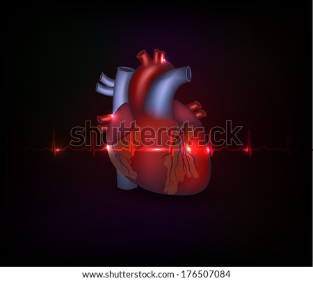 Beautiful cardiology poster, heart illustration and normal cardiogram on a dark background - stock vector