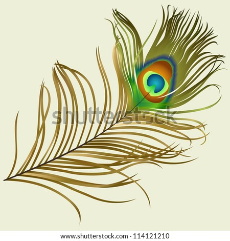 Beautiful colourful feather of peacock. EPS 10 - stock vector