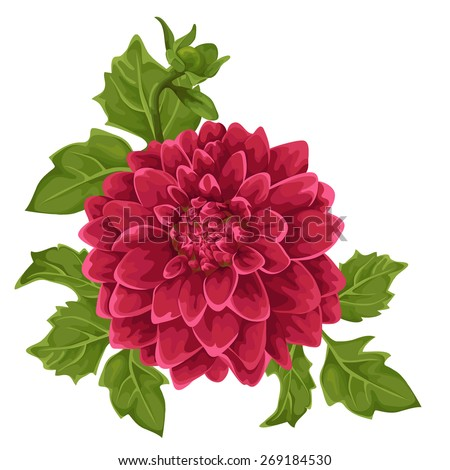 Beautiful dahlia flower isolated on white.  - stock vector