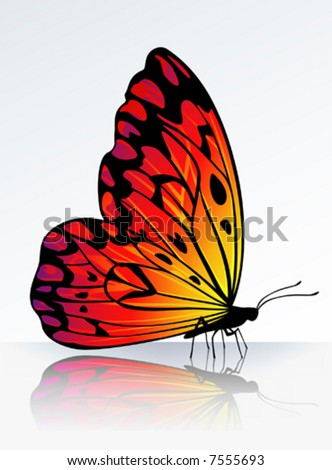 Beautiful fire-colored butterfly on reflecting surface - stock vector