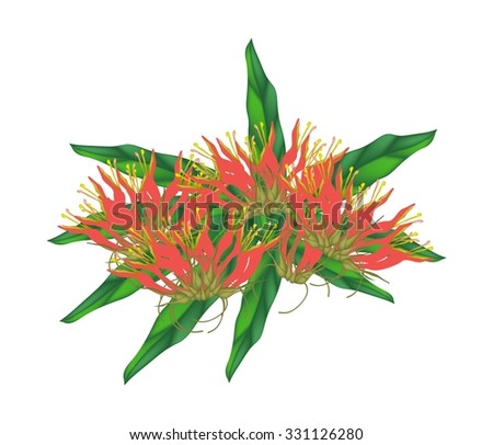 Beautiful Flower, Illustration of Red Clinacanthus nutans Flowers with Green Leaves Isolated on A Transparent White Background.