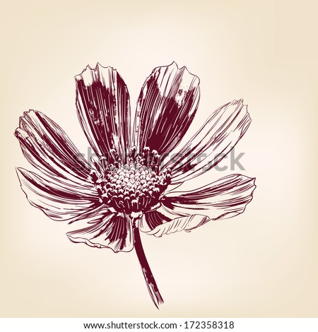 Beautiful Flowers daisies hand drawn vector illustration realistic sketch - stock vector