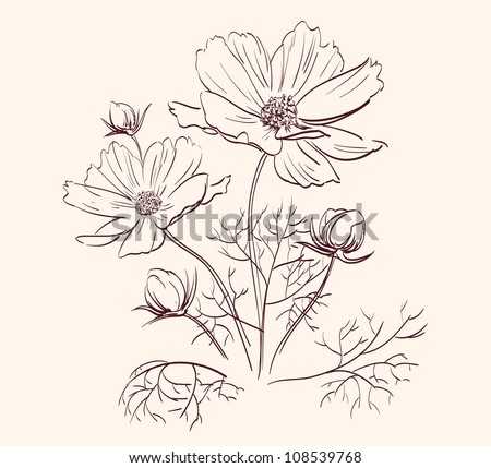Beautiful Flowers  drawing vector illustration  isolated - stock vector