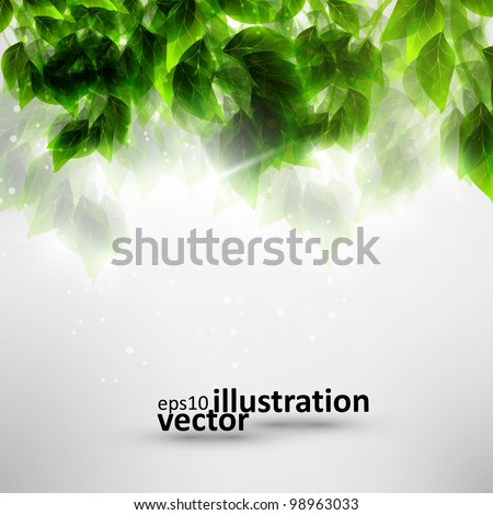 Beautiful green leaves, eco vector background eps10