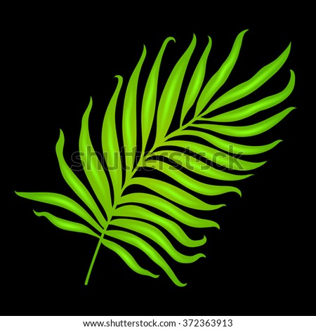 Beautiful isolated palm leaf colorful tropical jungle vector background