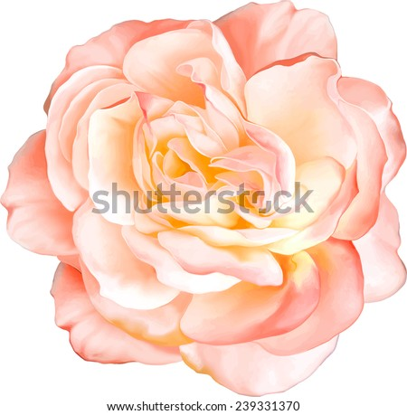 Beautiful light orange red Rose Flower isolated on white background. Vector illustration - stock vector