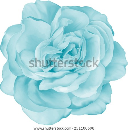 Beautiful light Yellow Rose. Spring Flower isolated on white background. Vector illustration - stock vector