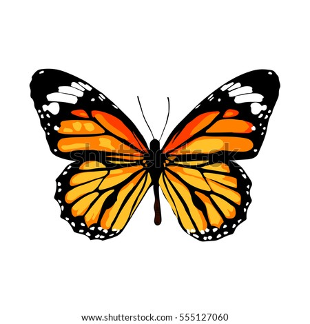 Drawing Butterfly Stock Images, Royalty-Free Images ...