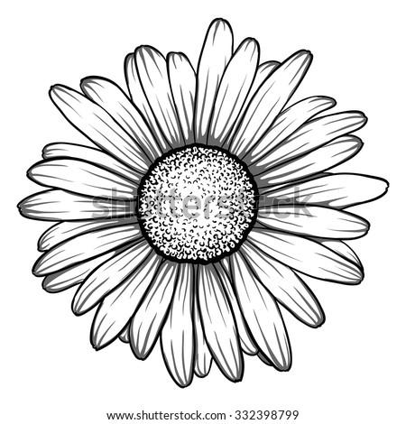 Beautiful Monochrome Black White Daisy Flower Stock Vector