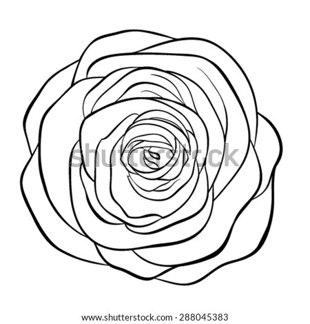 Rose Line Drawing Stock Images, Royalty-Free Images & Vectors ...